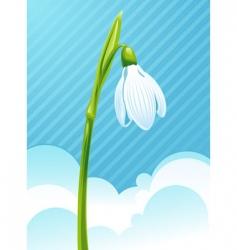 white snowdrop vector image