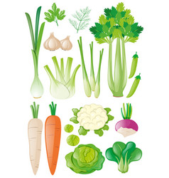 different types of vegetables vector image vector image