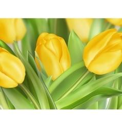 Tulips on white background EPS 10 vector image