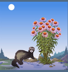 a poster on the theme of wildlife mongoose near vector image