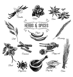 Hand drawn set with herbs spices vector