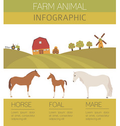 Horse farming infographic template stallion mare vector