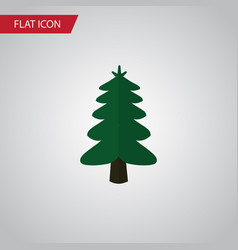Isolated spruce flat icon park element can vector