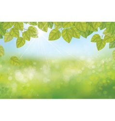 leaves spring background vector image