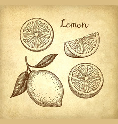 lemon set on old paper background vector image