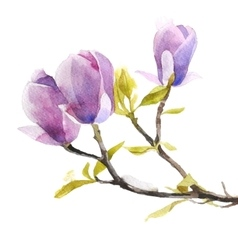 Watercolor magnolia flowers vector