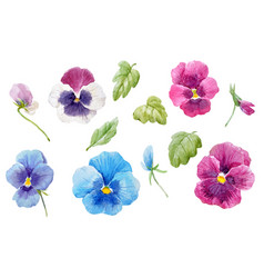 Watercolor pansy flower set vector