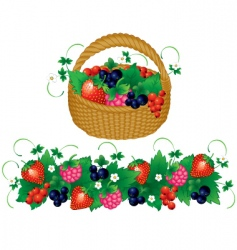 basket of berries vector image