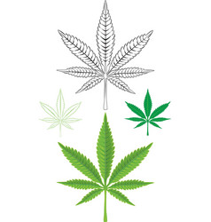 Cannabis Marijuana Leaf vector
