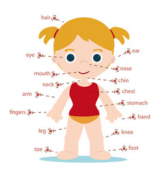 girl body parts vector image