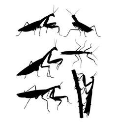 Praying mantis animal silhouette vector