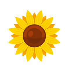 sunflower on white background flat style vector image