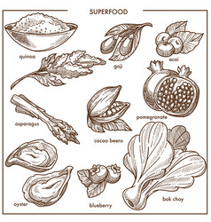 superfood healthy diet food sketch icons berry vector image