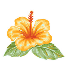 Tropical hibiscus flower vector