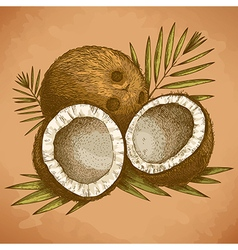 engraving coconuts retro vector image