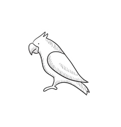 Parrot sketch icon vector image