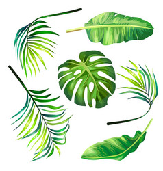 set botanical tropical vector image