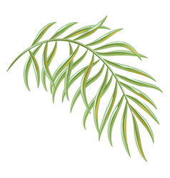 Tropical coconut palm leaf vector
