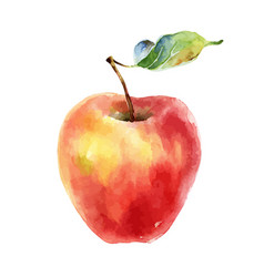 Watercolor red yellow apple on white background vector