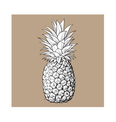 Whole unpeeled uncut pineapple isolated sketch vector