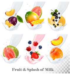 big collection icons of fruit in a milk splash vector image vector image