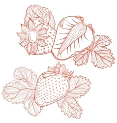 drawing of strawberries vector image vector image
