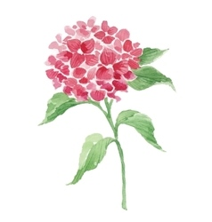 Branch of red hydrangea vector image