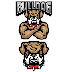 fierce bulldog mascot crossed arm pose vector image
