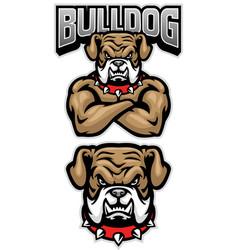 Fierce bulldog mascot crossed arm pose vector
