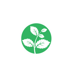 Mint leaves flat icon vector