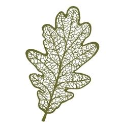 oak leaf isolated on white background vector image