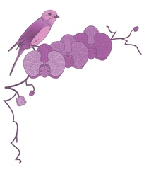 Orchid and bird vector