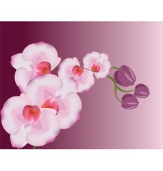 Orchid flowers background vector image