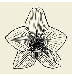 Small orchid flower vector