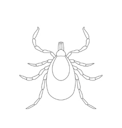 Tick parasite Sketch of Tick Mite Tick isolated vector image