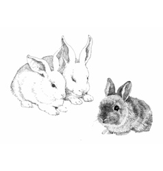 Sketched cute rabbits vector image