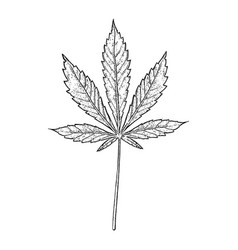 Cannabis leaf black and white vector