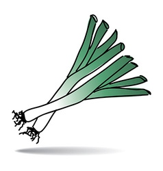 Freehand drawing leek icon vector