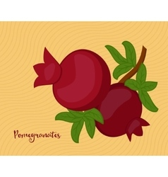 Pomegranate fruits with leaves vector