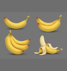 Realistic yellow banana bananas bunch 3d vector