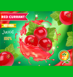red currant juice advertising package design vector image