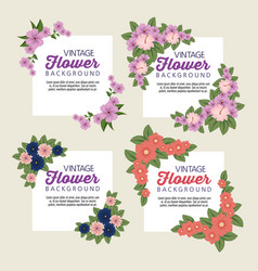 set tropical flowers with petals and leaves vector image