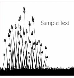 wheat grass vector image