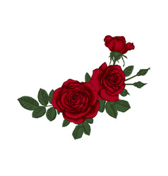 beautiful bouquet with red roses and leaves vector image