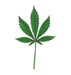 Cannabis leaf on white background vector
