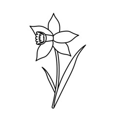 Daffodil flower leaf bloom thin line vector