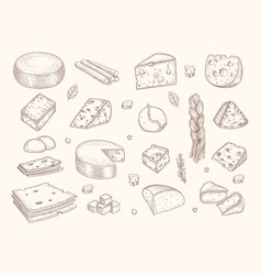 Drawn cheese gouda parmesan mozzarella delicious vector