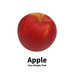 Realistic fruit apple vector image