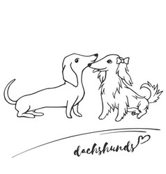 Short-haired and long-haired dachshunds get vector