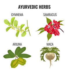 ayurvedic herbs set isolated on white gymnema vector image vector image